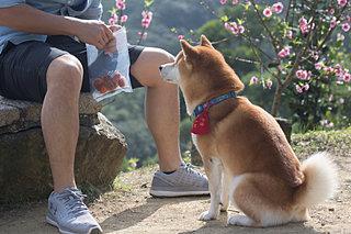 愛犬のおやつ、どうしていますか?〈おやつの与え方5つのポイント〉