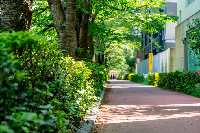 秋になったら歩きたい!日本の美しい道、8月10日は道の日(tenki.jp ...