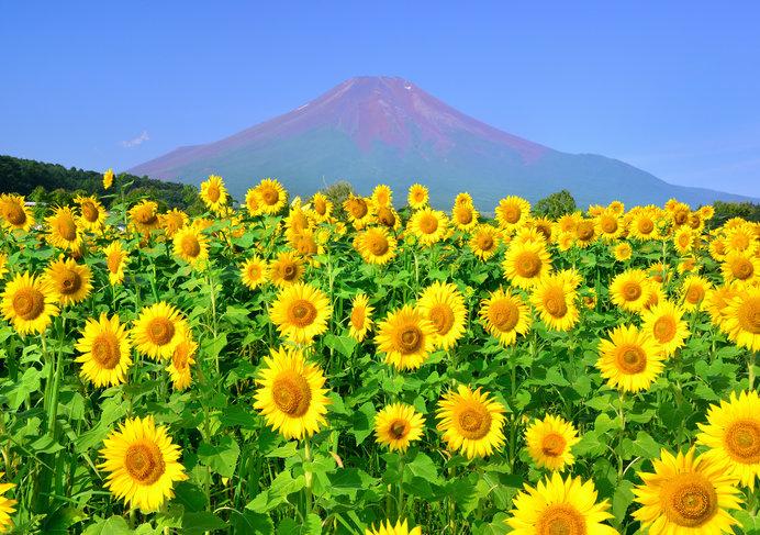 富士山は現在、すべてのルートで山頂まで通行可能です
