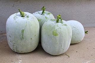 真夏が旬!?季語は秋?癒しの健康食材「冬瓜」をもう頂きましたか?