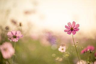 「知って得する季語」──秋に鳴く虫のキュートな別名とは?