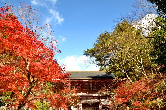 秋の「鞍馬寺」
