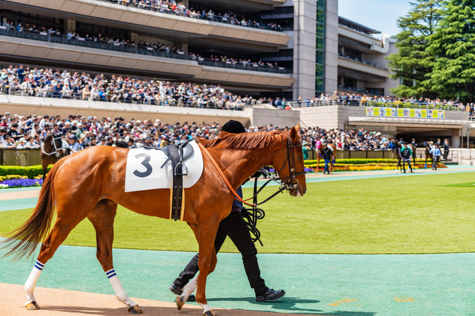 出走前の馬の様子をチェックするパドック