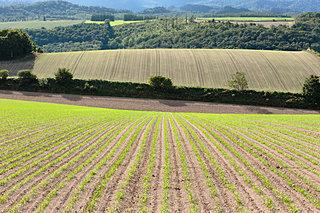 北海道で秋まき小麦の種まきが始まりました。雪の下で小麦の芽はどうやって過ごすの?