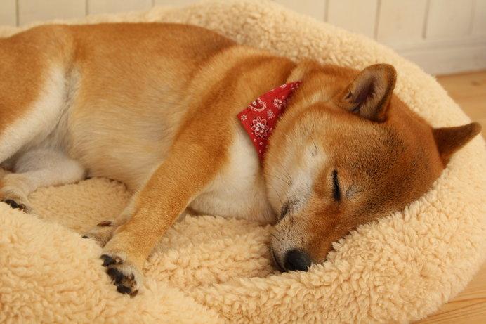 眠る愛犬の姿は、癒やされますよね♪