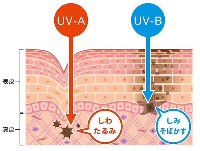 紫外線は種類によって、波長の長さ、肌への影響が異なります