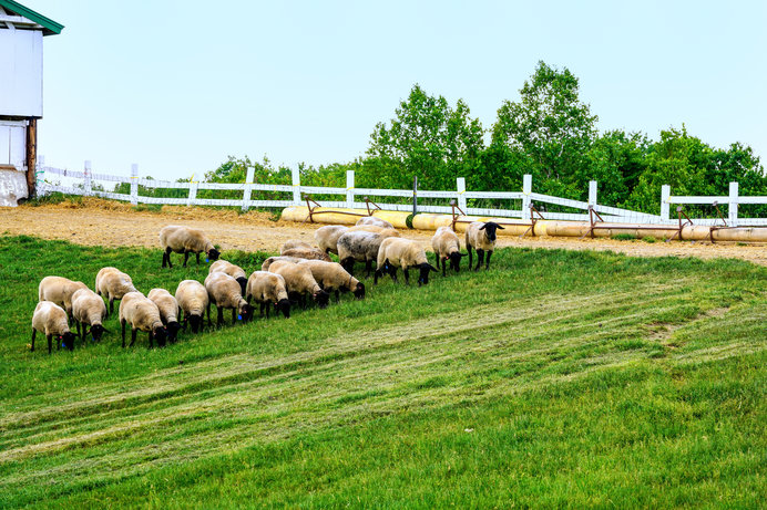 これぞ、THE 牧場!といった雰囲気(画像はイメージ)