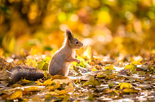 日本一早い紅葉を見に行こう!「北海道の紅葉」絶景4選