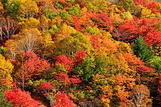 10月から見ごろ!!一足早い紅葉を楽しむなら北へ。「東北の紅葉」絶景4選