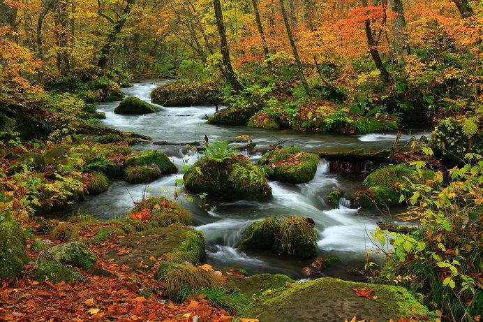 奥入瀬渓流(青森)/全長14kmの渓流を散策。木々と水流の調和が美しい