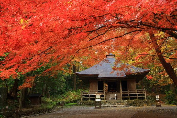 中尊寺(岩手)/金色堂と赤色のコントラスト!!世界遺産を彩る紅葉