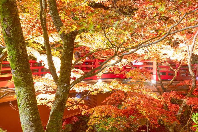弥彦公園もみじ谷(新潟県)
