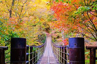 北関東の紅葉を見に行こう♪吊り橋の空中散歩も楽しい紅葉名所4選