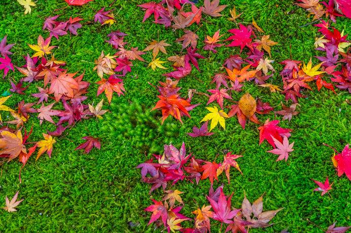 絶景紅葉スポットで秋を満喫♪~関西編~