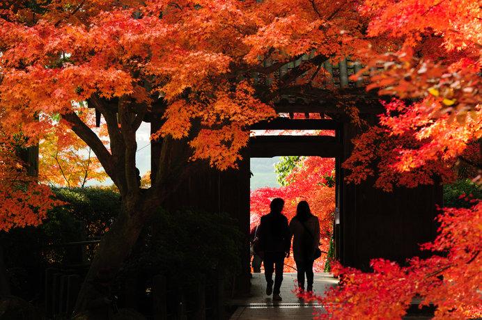 春はツツジ、秋は紅葉の名所として知られる佐賀の「大興善寺」