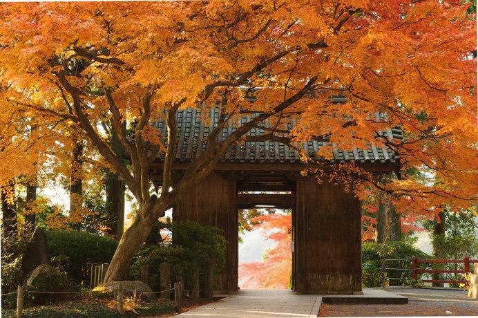 大興善寺の山門「仁王門」は、前後に豊かな紅葉が広がり、フォトスポットとしても人気