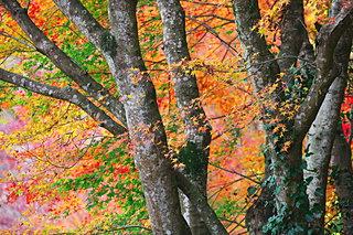 南関東の紅葉を見に行こう♪千葉・神奈川・埼玉の紅葉名所4選
