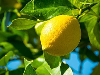 味わい・香り・ヘルシーさが凝縮したレモンパワー!