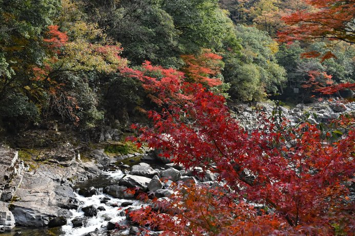「長門峡(ちょうもんきょう)」を染め上げる紅葉