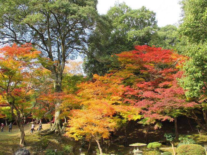 紅葉した木々が映える「尾関山公園」