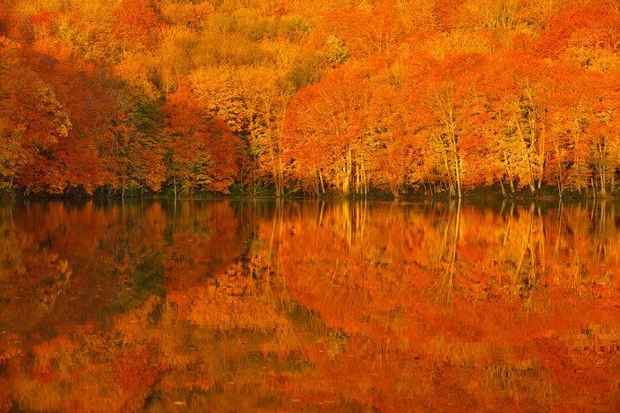 日が昇りゆく一瞬、静寂の湖面が紅葉に染まる様をおさえた「奇跡の一枚」