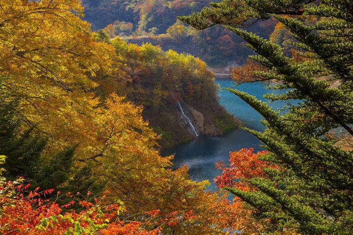 湖畔の高台から望むと、鮮やかな紅葉と四万ブルーのコントラストが見事