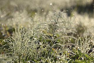 秋も深まります。二十四節気は露も冷たく感じる「寒露」です