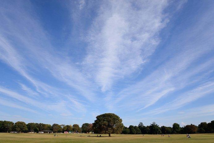 広々とした公園でお散歩の秋を堪能しよう!東京の公園4選