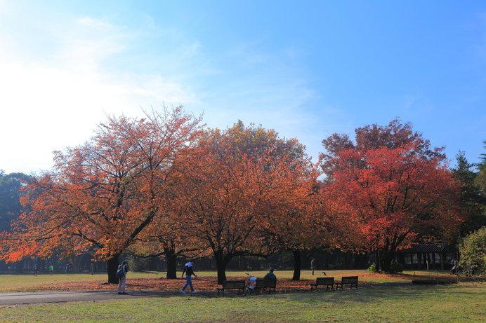 紅葉時期の砧公園