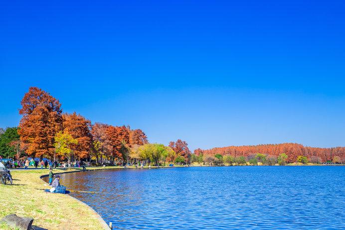 秋の水元公園