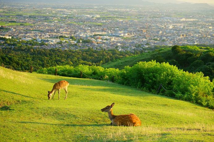 奈良・若草山山頂からの眺め