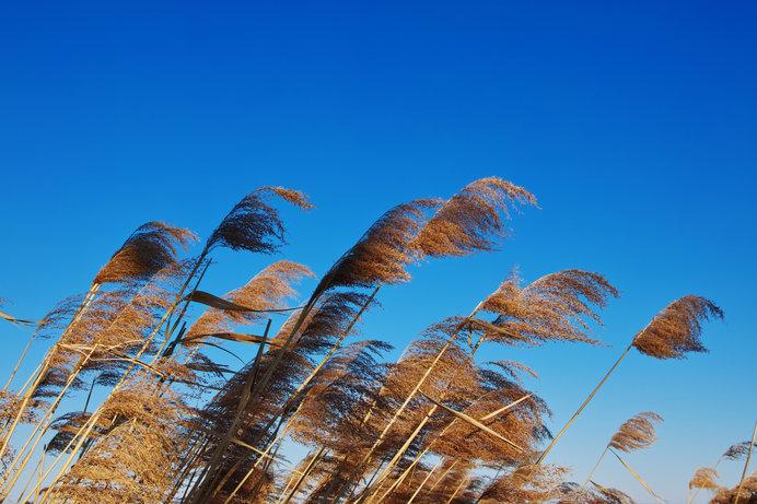 「立冬」。今日から冬が始まるよ!と暦が伝えています