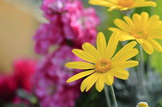 防寒、防風、霜よけ対策は大丈夫?寒い冬もたくましく乗り越える花たちは?