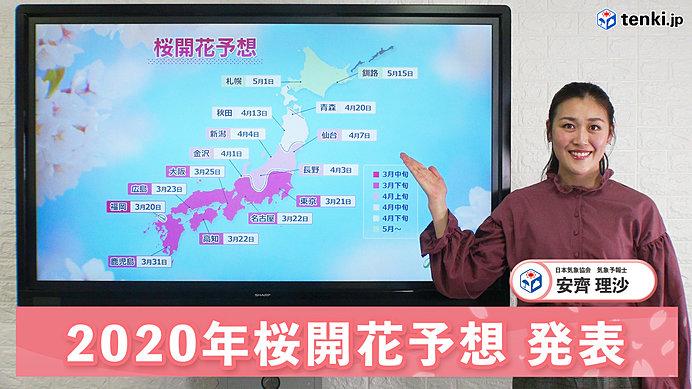 【動画で解説】暖冬は桜の開花にどう影響する? 日本気象協会から「2020年 桜開花予想」発表!
