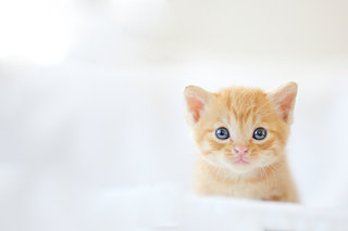 泊まれる猫カフェ、猫が働く駅、猫人気止まらず!?2月22日は「猫の日」