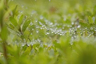 二十四節気「雨水(うすい)」は春を迎える準備段階。冬を惜しみつつ春への準備を!