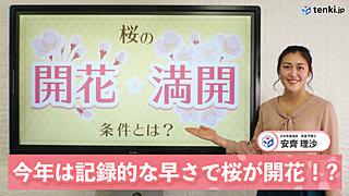 【動画で解説】今年は記録的な早さで桜が開花!? 桜の開花と満開の条件についても解説!