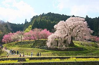 2020年の桜に逢いたい♪ 近畿地方のさくら名所3選