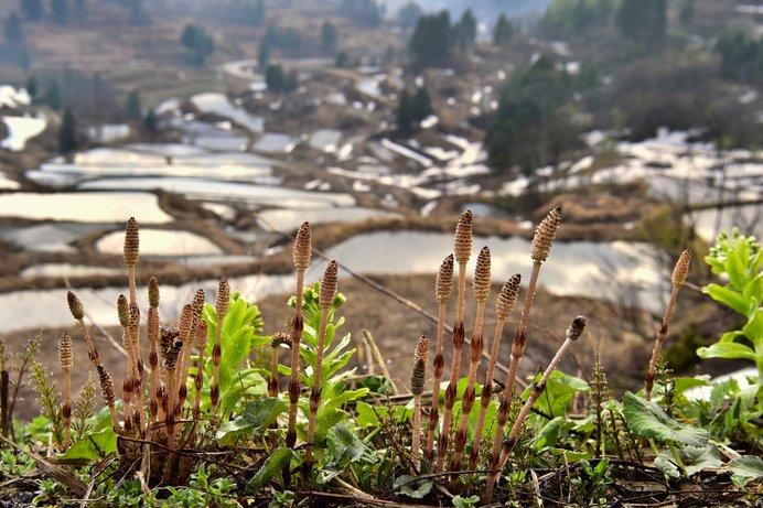 春三月。草木の芽吹きはそこにもここにも