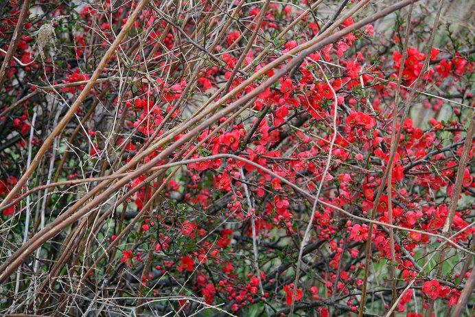 春は心乱れる季節とも。まばゆい花が目を眩ますのでしょうか