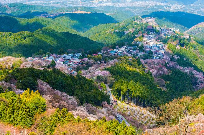 日本の美のエッセンス、花見文化のはじまりは?-「古今和歌集」の後の桜-_画像