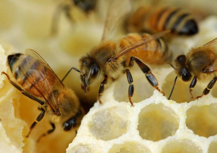 働き蜂の仕事は多岐にわたります