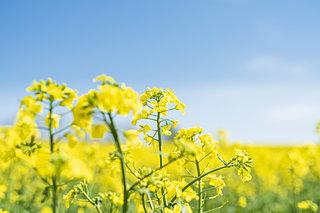 春の花を探しに♪関東のお花スポット3選