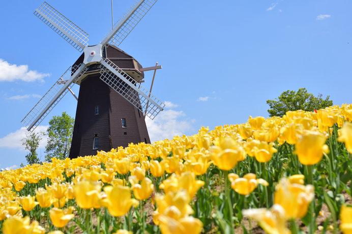 花博記念公園鶴見緑地、風車の丘