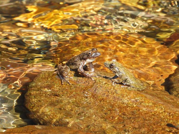 「交尾」はカジカガエルを題材にした珠玉の傑作