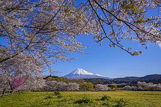 意外と知らない「都道府県の花」あなたの街はどんな花?