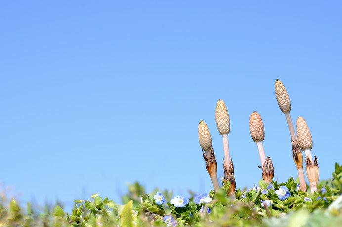春爛漫!知っていると楽しくなる春の野花の名前