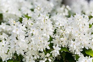 「卯月」の語源は卯の花が咲く頃だから?うと卯と兎と宇をめぐる旅~後編~
