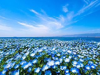 春から初夏の癒し、ブルーの花々。あなたは何を思い浮かべますか?