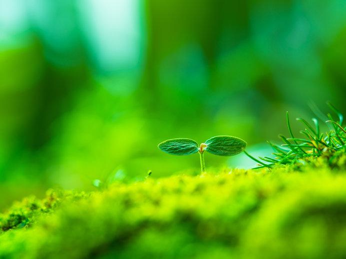 緑が眩しい季節!生命力あふれる「緑」のエネルギーで、心身をリフレッシュしましょう